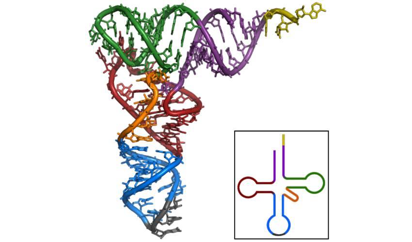 ¿Qué es y para qué sirve la biotecnología?